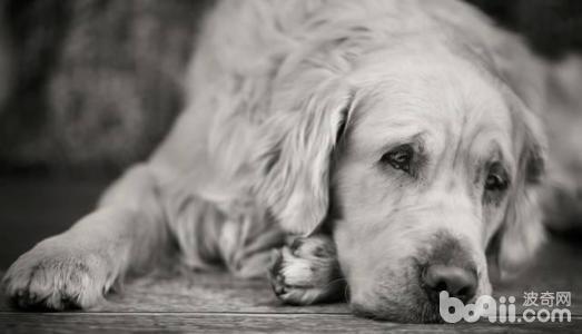 狗狗肢体语言,怎么读懂狗狗的肢体语言