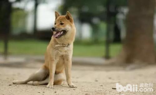 狗狗有体味,让狗狗味道不那么重的方法有哪些?