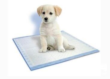 宠物尿垫使用注意事项及功效有哪些