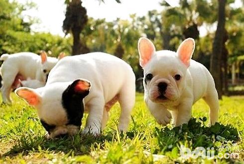 这几种狗狗需要将狗粮泡软 狗粮怎么泡
