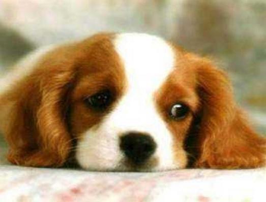新买的狗狗不吃饭怎么解决