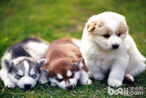 狗狗胆小怎么办 狗狗胆小的原因有哪些