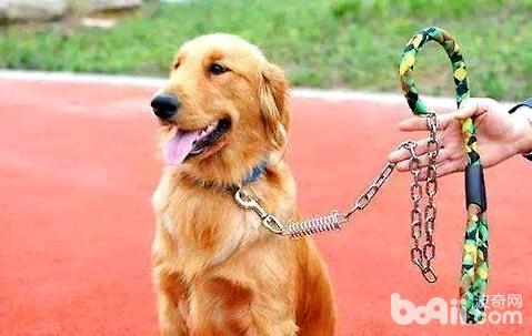 小狗带绳子不走怎么办