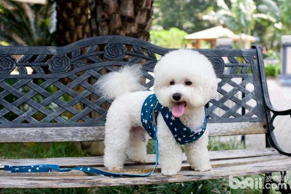 狗狗特别粘人怎么办?狗狗为什么粘人?