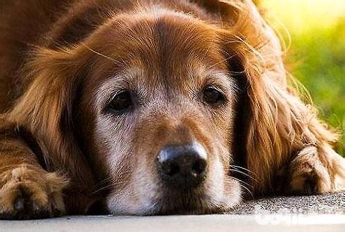 狗狗为什么不能吃含盐量高的东西狗狗能吃盐吗