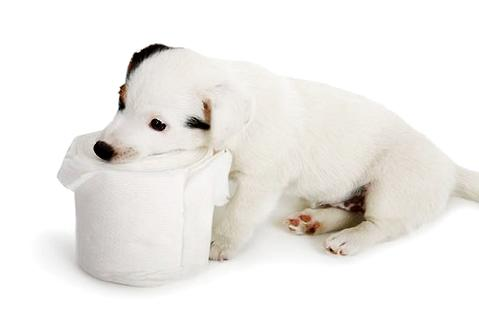 为什么要给狗狗喝羊奶粉不能喝牛奶吗