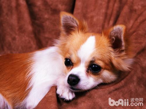 狗狗晚上嚎叫应该怎么办?