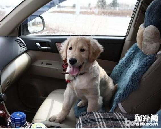养狗狗有哪些好处