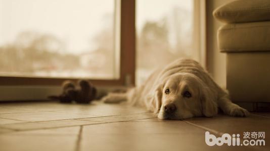 狗狗不让摸怎么办?