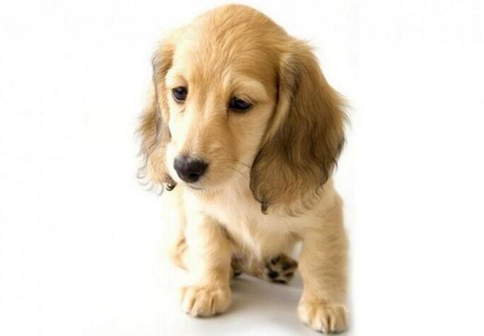 狗狗偏瘦的原因,狗狗偏瘦吃什么狗粮好?