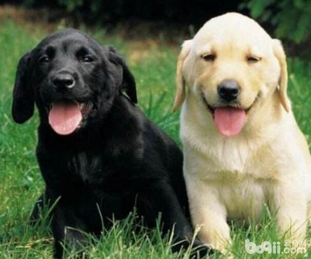 性格最温顺的狗狗都有哪些