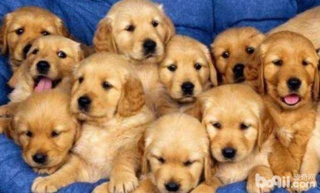 如何护理幼犬?护理幼犬的注意事项