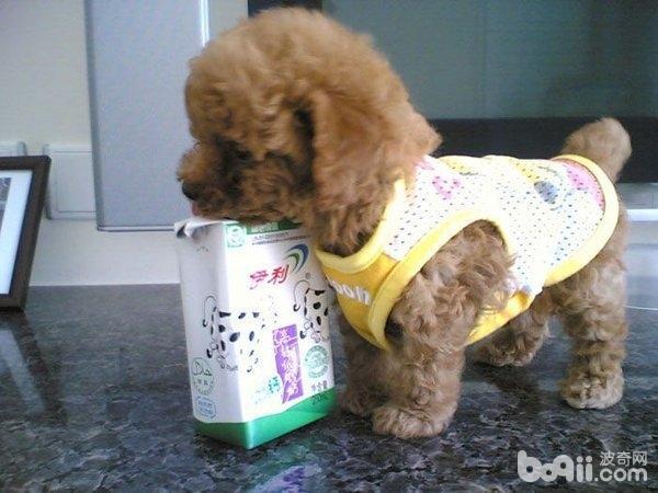 婴儿奶粉适合用来喂食幼犬吗?