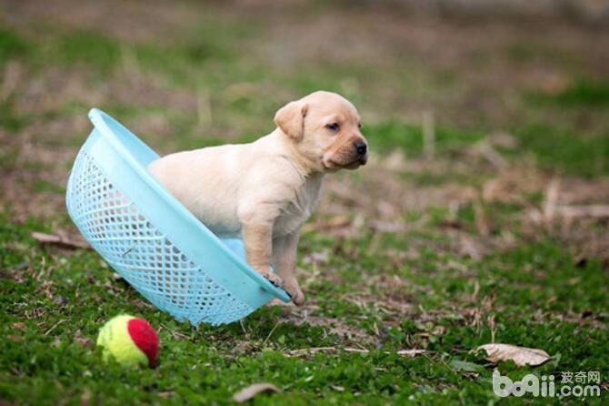 我们对狗狗的几种误解