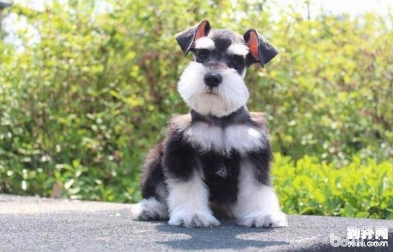 狗狗不喜欢吃药 怎么给狗狗喂药