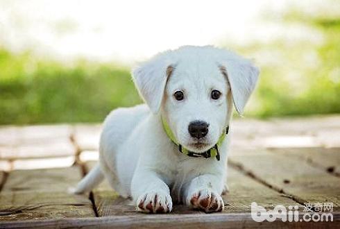 幼犬吃那种狗粮比较好怎么挑选合适的狗粮