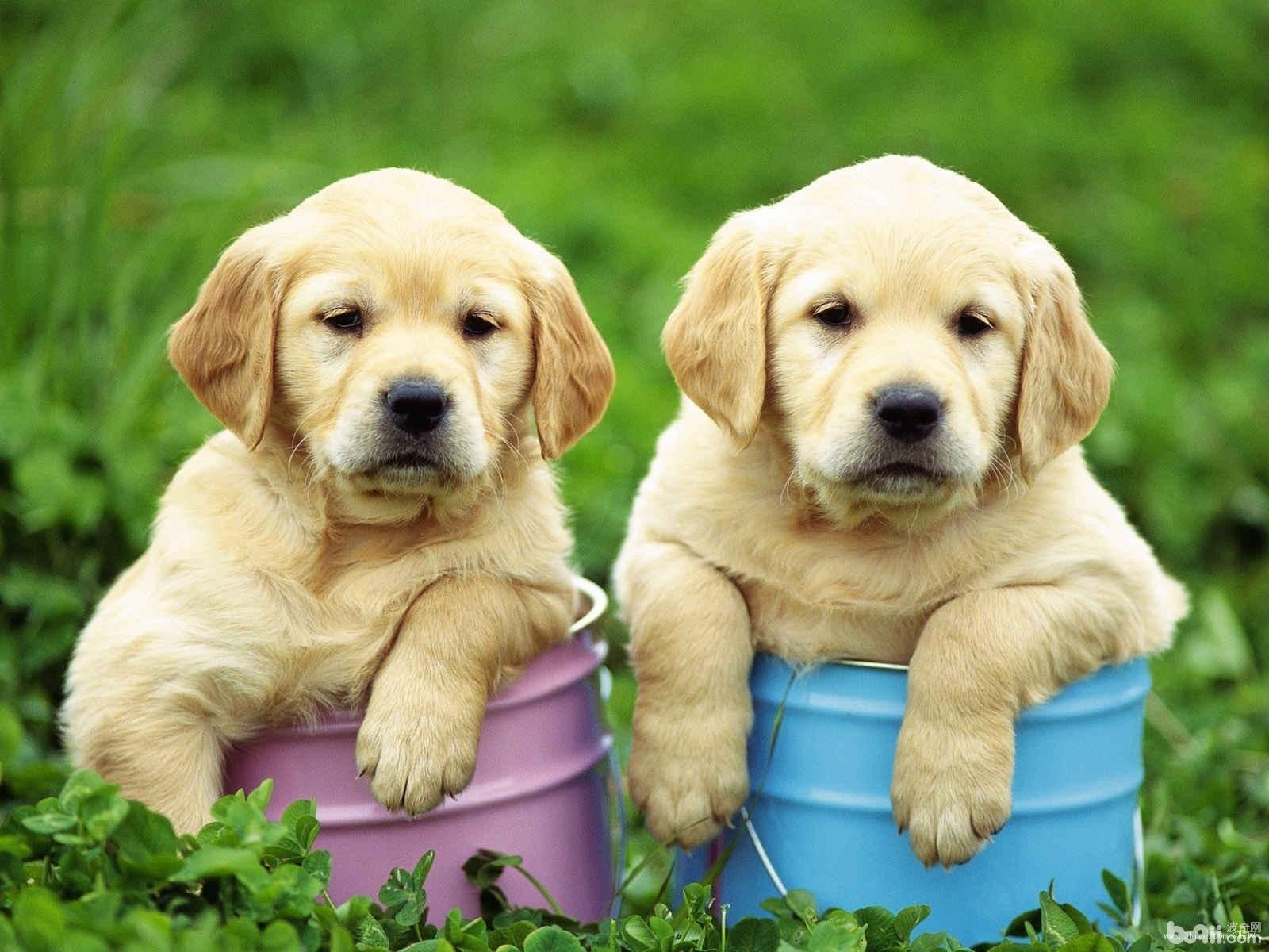 六件会让狗狗伤心的事情,宠物主千万别做
