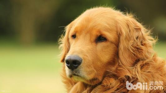 判断狗狗有没有吃饱的三个方法