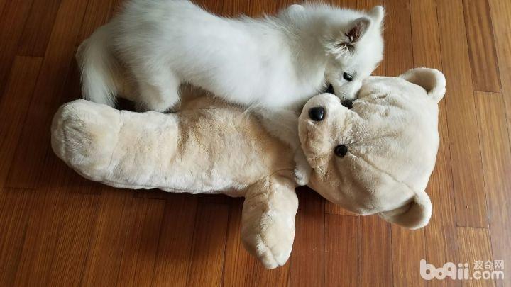公狗和母狗区别,公狗和母狗的区别都有哪些?