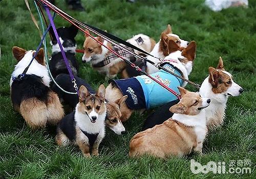 养狗可以提高人的幸福感吗?