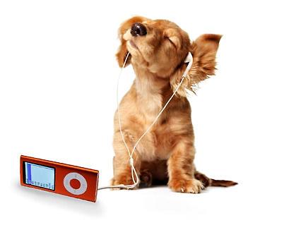 狗狗喜欢听什么音乐