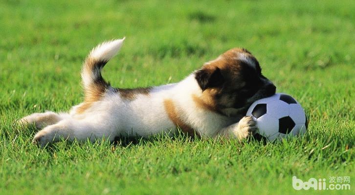 为什么狗狗爱吃屎,狗狗吃屎的原因有哪些?