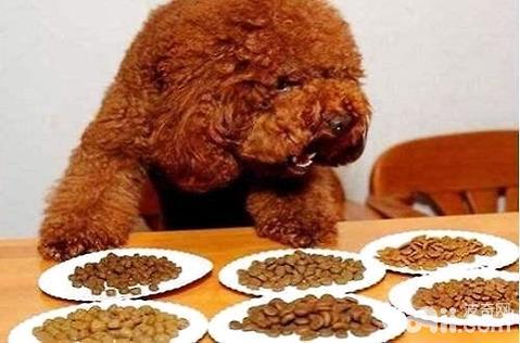 狗狗一天喂几次