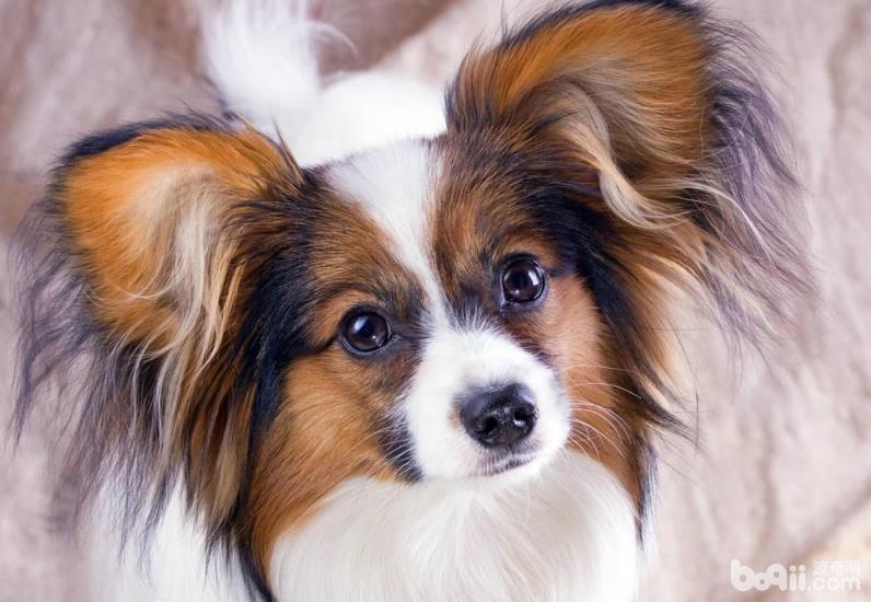 宠物主不可不知的十八条养狗小知识