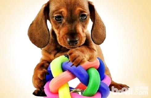 狗玩具.jpg