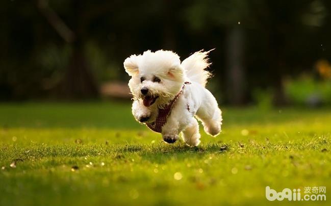 狗狗体臭的表现都有哪些?防止狗狗体臭的方法