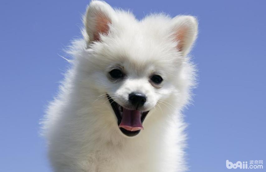 哪些食物狗狗吃了会造成生命危险?