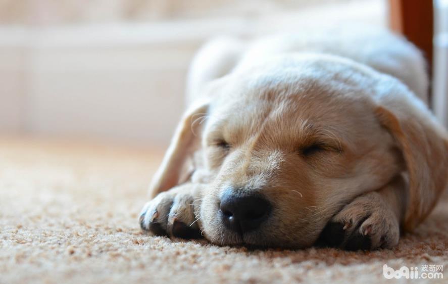 怀孕期间可不可以养宠物?怀孕期间养宠的好处有哪些?