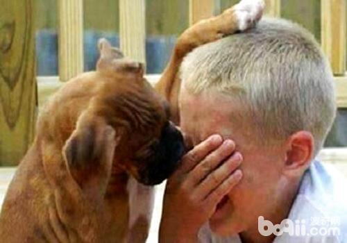 关于狗狗不为人知的几条小秘密,狗狗的秘密