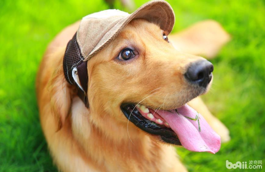以下这几点证明你已经深深爱上狗狗了
