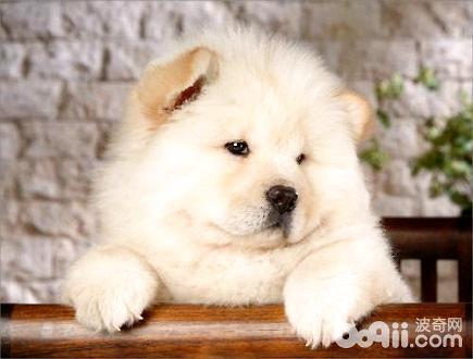 狗狗口水多怎么治疗?
