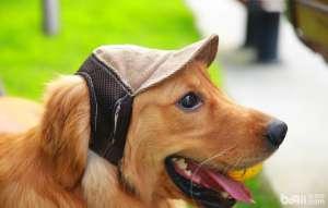 宠物主一定不要对狗狗做的五件事