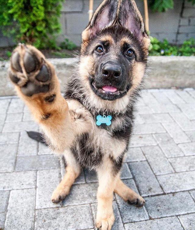 知识科普:狗狗会有时间观念吗? 宠物之家 第4张