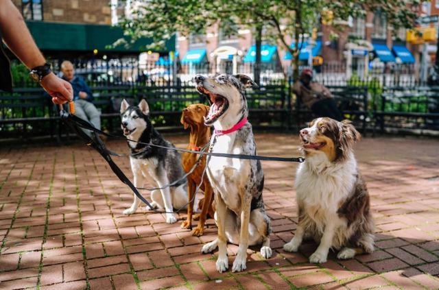 知识科普:狗狗会有时间观念吗? 宠物之家 第5张