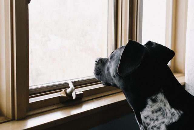 知识科普:狗狗会有时间观念吗? 宠物之家 第3张