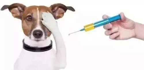 犬细小病毒病如何护理、治疗及预防?