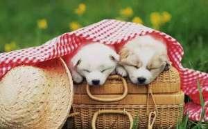狗狗细小病毒的症状与治疗