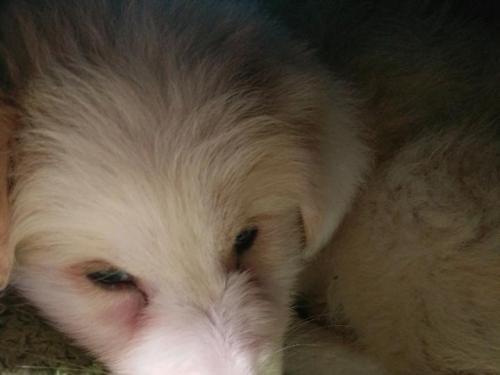 幼犬冠状病毒病的防治措施