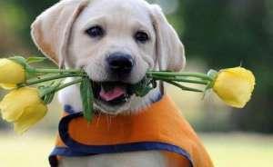 从这六方面就可以诊断狗狗健康情况?