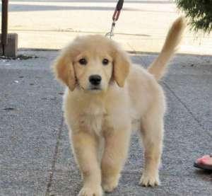 养宠知识:狗狗一天喂几次比较合适?