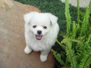 狗狗糖尿病正确的预防和护理方法