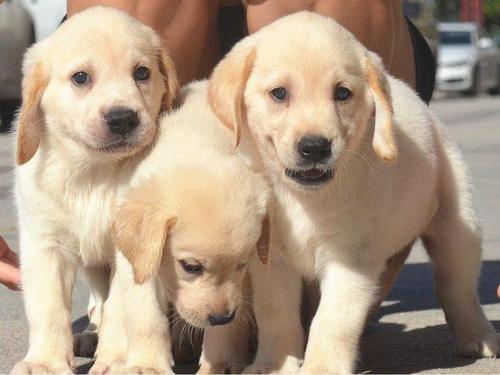 养宠知识:宠物狗定点大小便训练