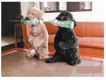 如何奖励狗狗呢?3种方法教给您