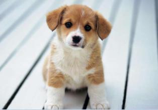 养宠知识:如何让新进家的狗狗喜欢你?