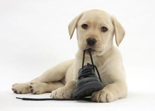 养宠知识:怎么训练狗狗卧下呢?
