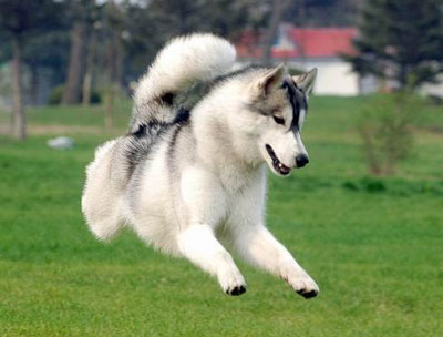 狗狗一出门就跑丢,怎么训练?